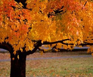Top 5 Mobile Billing Casinos With An Autumnal Charm