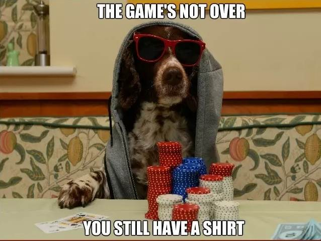 dog-game-over-poker-meme.jpg