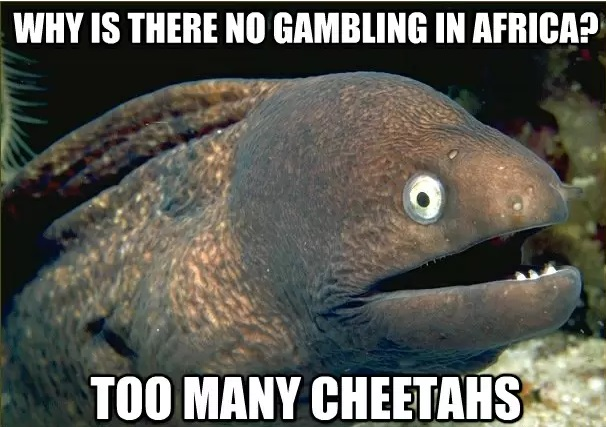 No Gambling in Africa Cheetahs Meme